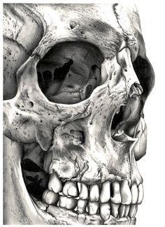 Close up skull would be a good tattoo, with something hidden in the eye. city scape, comic book scenario/villain, doctor who reference etc. Thigh/side/leg/upper right arm (ribs maybe? but PAINFUL – Art Skull Tattoos, Cool Tattoos, Totenkopf Tattoos, Arte Horror, Skull And Bones, Skeleton Bones, Human Skeleton, Human Skull, Dark Art
