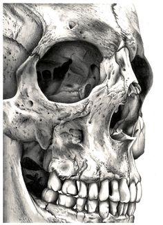 Cráneo N º 1 Reproducción en lienzo de lhayton |. Society6
