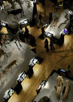 Green Lion - Henrietta Rose-Innes, Infecting the City 2013 Public Art, Lion, Community, Engagement, Rose, Green, Leo, Pink, Lions