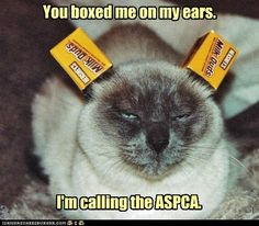 You boxed my ears