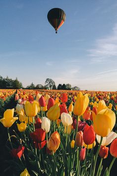 Gal Meets Glam - 2016 April 21 - Thomas Takeover: Quick Trip to Oregon - Wooden Shoe Tulip Festival Spring Aesthetic, Flower Aesthetic, Beautiful Flowers, Beautiful Places, Beautiful Pictures, Tulip Festival, Tulip Fields, Flower Wallpaper, Aesthetic Pictures