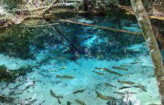 Brazil, Aquarium, Country, Painting, Dreams, World, Places, Goldfish Bowl, Rural Area