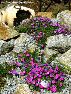 Steingarten pflanzen in form von kleinen b schen garten pinterest steingarten garten und - Wasserteich im garten ...
