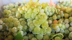 semillon-Cyprus-Wine-Crushing | by Fikardos Winery