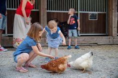 Unsere Hühner legen fleißig Eier und das freut unsere großen und kleinen Gäste, denn so können sie sich jeden Tag ihr eigenes Ei aus dem Nest holen und zum Frühstück verspeisen. Mmmmh, echt lecker. Nest, Pony Rides, Petting Zoo, Eggs, Studying, Nest Box