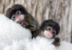 Aawww! Twins.
