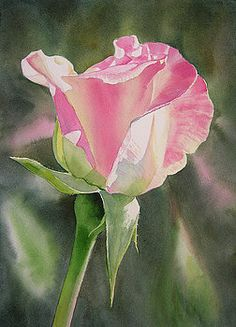 Princess Diana Rose Bud Painting by Sharon Freeman - Princess Diana Rose Bud Fine Art Prints and Posters for Sale Art Floral, Watercolor Rose, Watercolor Paintings, Watercolours, Diana Rose, Rose Art, Botanical Art, Rose Buds, Flower Art