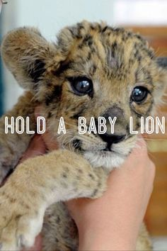 Hold a baby lion...and even babies of polar bears(I luvvvvv). Oh yes babies of tigers too..coz cant dare to hold the big ones..lol