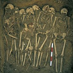 Some 10,500 skeletons dating from the 12th to 16th centuries were uncovered by the archaeologists, including mass burial pits which had scientists baffled because the radiocarbon dating didn't match known events in medieval England like the Black Death or Great Famine. Archaeologists who discovered thousands of skeletons in medieval mass graves in London's East End believe many were the victims of a 13th Century volcanic eruption on the other side of the world.