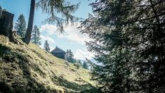 Alpe-Adria-Trail Mount Rainier, Trail, Mountains, Nature, Dog Food, Hiking, Woodland Forest, Naturaleza, Bergen