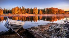 """""""ruska""""  - means colors of autumn, Finland in 2014"""