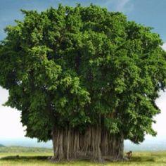 Les arbres les plus beaux du Monde