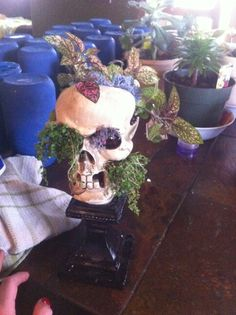 plants in a skull ♡ favorite things
