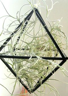 himmeli air plant holder with spanish moss