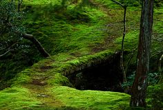 mossy path ...