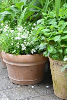 Claus beautiful potts