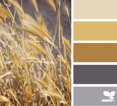 field tones. Pretty for the family room