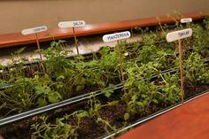 10 ideias para ter uma horta requintada dentro de casa (Foto: Gabriela Garcia)