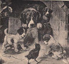 Newfoundland Dog with NEWFIE Puppies Baby Raven or Crow Bird Antique Print | eBay