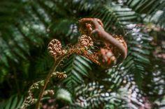 Les fougères néozélandaises – 100% photos (ou presque) | Nouvelle-Zélande | Blog voyages ➡ Prenez Place