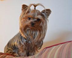 Sassy on her perch | Flickr: Intercambio de fotos