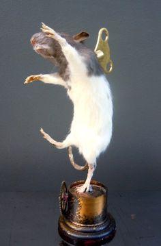 Bizarre Clockwork Taxidermy Dancing Rat Pussycat Dolls, Creative Skills, Assemblage Art, Rats, Scary, Steampunk, Weird, Creatures, Sculpture