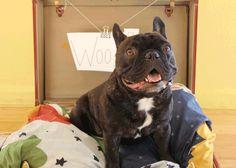 BrightNest   Make a Stylish No-Sew Dog Bed for Under $15