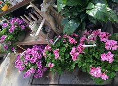We have beautiful hanging baskets for Mom! #OrangevilleFlowers #florist #flowerlovers #floristorangeville