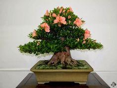 Flower Homes: Bonsai Flowering