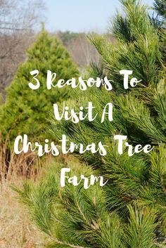 Theresa's Reviews - 3 Reasons You Should Visit A Christmas Tree Farm - Holidays - Decorating - Local Farms - Shop Local - Support Local Businesses