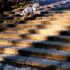 Climbing the stairs in the beautiful late afternoon Sun.