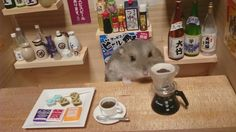 https://www.insidejapantours.com/blog/wp-content/uploads/2014/11/hamster-4.jpg