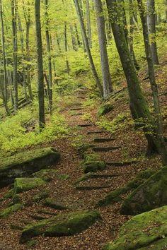 will prosper. My magic is Photographic Print: Germany, Rhineland-Palatinate, Palatine Wood, Moosalb, Karlstal Gulch by Andreas Keil :