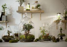 Après être tombé dans l'oubli pendant des années, le terrarium fait son grand retour. Nécessitant peu d'entretien, il est la     touche green parfaite ...