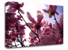 Pink Cherry Blossom in Sunlight floral canvas from only £19.99 at Infusion Art http://www.infusionart.co.uk/products/Pink-Cherry-Blossom-in-Sunlight-251362.aspx