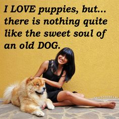 """I LOVE puppies, but... there is nothing quite  like the sweet soul of  an old DOG.""  (Y) Like if you agree!"