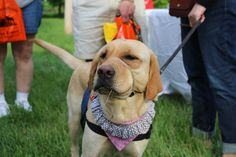 Perk Valley Pet Eatery Dog's Night Out at the Park, May 2014