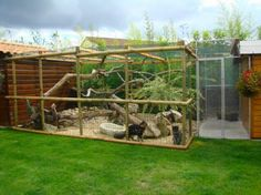 outdoor cattery. I LOVE this. Having tree branches to scratch and greenery makes it more like 'proper' outdoors. Love the logs on the ground, too.