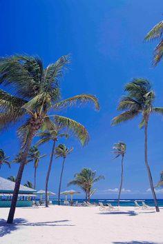 Romantic Nisbet Plantation Beach Club in St. Kitts and Nevis - VacationIdea.com