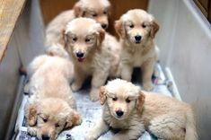 ^_^......................Golden beauties!!!!!!!!