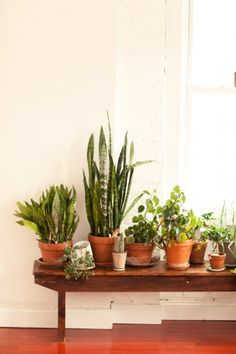 Rustic chic in Brooklyn. Photos by Rus Anson.  When I first saw this I thought it was a picture of my sisters living room. #plants