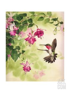 Paintings of Hummingbirds with Flowers   Hummingbird with Flowers Print