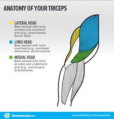 Bodybuilding.com - 6 Strategies To Target Your Triceps Lateral Head And Build Bigger Arms