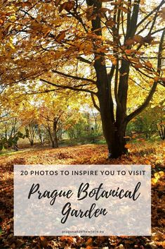 Visit Prague Botanical Garden, Czech Republic