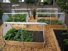 Cloche system and how it works over the season. One of the best I've seen yet. http://gardenelvesseattle.com/veggie-gardens/