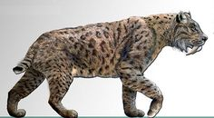 sabre tooth cat - Google Search