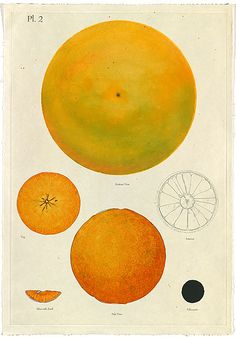 Donald SULTAN, Orange Feb. 27, 1996  The beauty and simplicity is stunning. Has to be seen up close