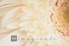 imaginatephotography.com » Bloomington Normal Illinois Photographer for Children, Babies, Newborns, Weddings, Portraits, and Families