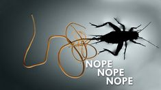 Wasps will paralyze then kidnap cockroaches to lay their egg which the larvae then eats. Fiction Writing, Fan Fiction, All About Animals, Makeup Quotes, Light Art, Zombies, Bugs, Nature Photography, Science