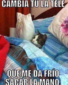 Imagenes de Humor #memes #chistes #chistesmalos #imagenesgraciosas #humor www.megamemeces.c... ☛☛☛ www.diverint.com/...